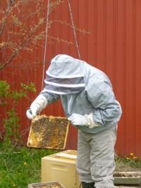Bierne tilses af Dan